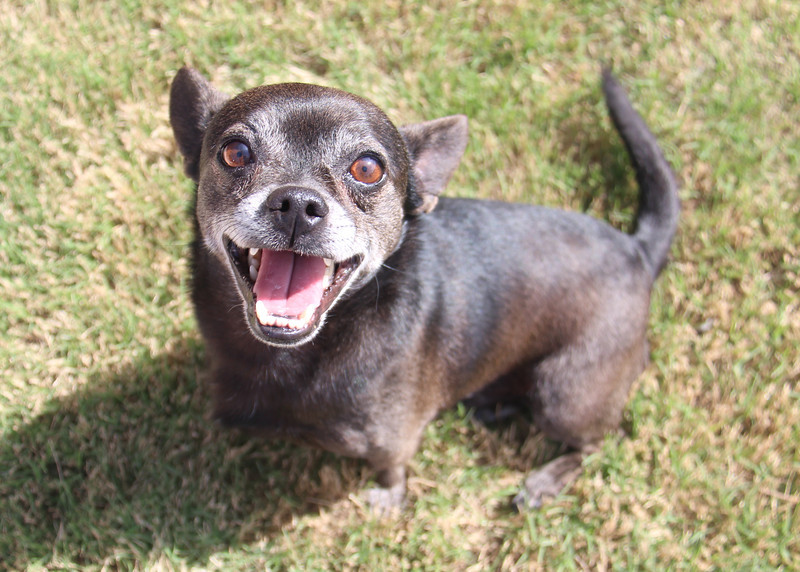 Meet Toby! He needs a home. Please contact Susie Cobb @ (803) 279-8069 for more adoption information.