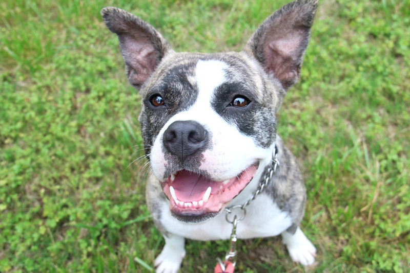 Meet Libby, a very sweet girl who needs a home! Please contact Susie Cobb @ (803) 279-8069 for more adoption information.