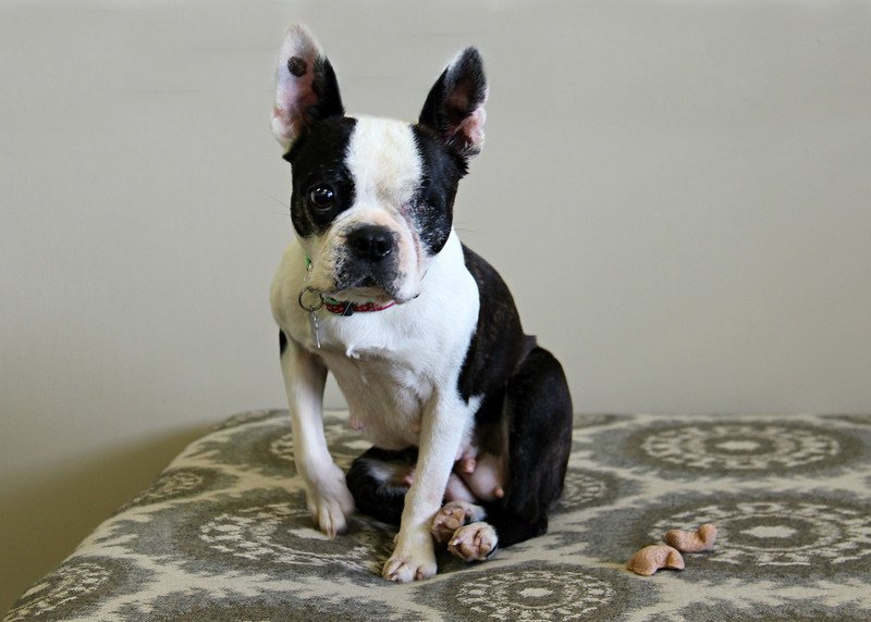 Meet Chrissy! She's looking for a forever home! Please contact Susie Cobb @ (803) 279-8069 for more adoption information.