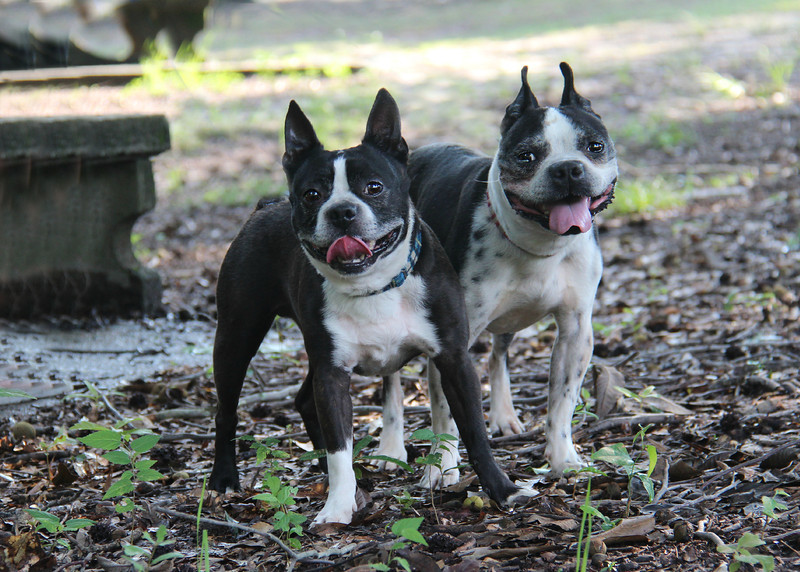 These boys need a homes! Please contact Susie Cobb @ (803) 279-8069 for more adoption information.