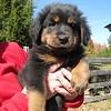 Capone - Adopted Nov 5, 2008