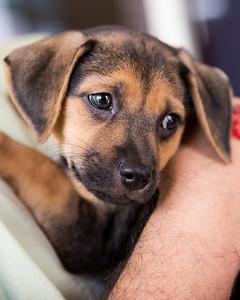 Cinnamon's Puppy