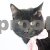 4-26-2016-Cat-Christopher-2