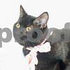 4-26-2016-Cat-Christopher-3