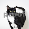 8-7-2016-Socks-Cat-AD-1