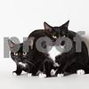 bichon&poodle-hi-evan-IMG_3682