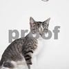 Button_Cat_AWLA_7_16_2017_04