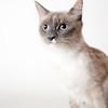Kiki_Cat_AWLA_11_9_2017_DS