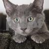 AquaMarine_Cat_AWLA_10_6_2017_DS_2