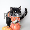 BW_10_25_2017_AWLA_Cat_001_AD