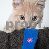Arnold_Cat_AWLA_10_6_2017_DS_2