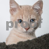 Arnold_Cat_AWLA_10_6_2017_DS_3