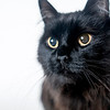 Cooper_Cat_04052018_AWLA_03