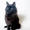 Cooper_Cat_04052018_AWLA_01