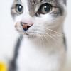 Clique_Cat_02212018_AWLA_02