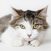 Catsby:ALS:HiRes021118 (4)