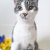 Clique_Cat_02212018_AWLA_01