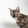 Mercy_Cat_AWLA_06202018_003