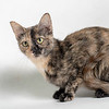Mercy_Cat_AWLA_06202018_005