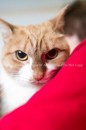 Annie_Cat_03072018_AWLA_14