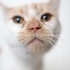 Malachi_Cat_03072018_AWLA_08