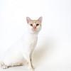 Malachi_Cat_03072018_AWLA_16