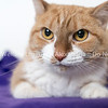 Annie_Cat_03072018_AWLA_02