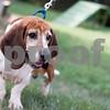 8-7-2016-Fred-Dog-AD-4