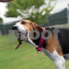 6-27-2016-Dog-MayBelle-AD-3