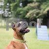 6-27-2016-Dog-Bo-AD