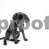 5-10-2016-Dog-Bonnie-DS-3