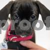 5-10-2016-Dog-Bonnie-DS