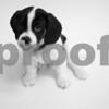 5-10-2016-Dog-Tonto-DS