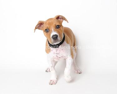 Adoption Pictures