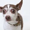 Therbius_13122017_Dog__AWLA_AD_00