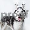 AWLA1703 adoptions 0212-4072-T