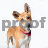 AWLA1703 adoptions 0212-4070-T