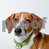 AWLA1703 adoptions 0212-4066-T