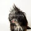 sarah AWLA1730 adoptions 0627-1711-T