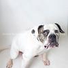 Buck_Dog_02212018_AWLA_05