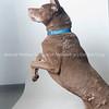 Cantelope_Dog_02212018_AWLA_02