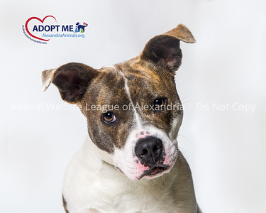 2018 July  Dog Adoptions