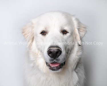 2018 March Dog Gallery
