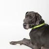 Boone_Dog_AWLA_02252019_004DS