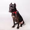ARYA-AWLA0926 adoptions-4592-T