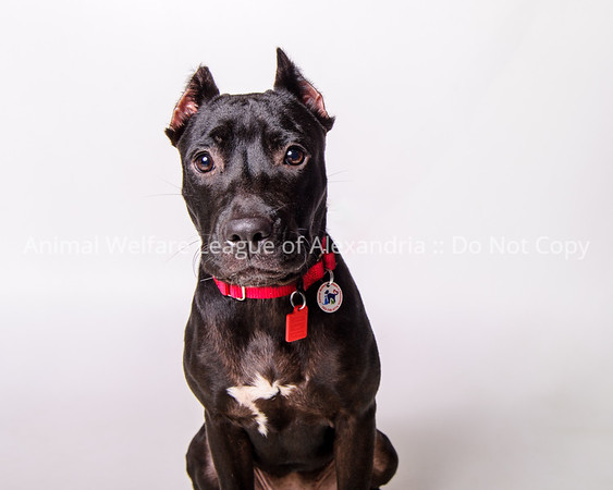 ARYA-AWLA0926 adoptions-4590-T