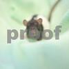 4-26-2016-Rat_Twix