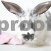 Bunyonce_Rabbit_AWLA_8_14_2017_01