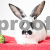 LilKit_Rabbit_AWLA_8_14_2017_01