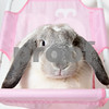 Holiday_Rabbit_AWLA_7_16_2017_01
